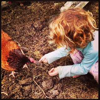 365/240 • last day of being a three year old, and my heart is a little bit wistful. Feeding worms to the chooks is a pretty good way to start the day, no matter how old you are • #2014_ig_240 #3yo #thelastdaysofthree #chooks #spring #backyard