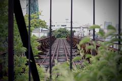 closed railway bridge (Hoo Koo E) Tags: railroad bridge fence weed rust sigma yokohama  foveon railbridge      closedrailway  trafficline  closedline dp2x guardfence