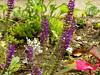 orchids (jessicabragen) Tags: ocean bridge roses summer beach inn downtown nj shore sunflower jersey shops boardwalk jerseyshore oceangrove oceangrovenj jerseystrong