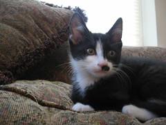 Walter (marissasophiagillaspy) Tags: cats kittens mustache gillaspy
