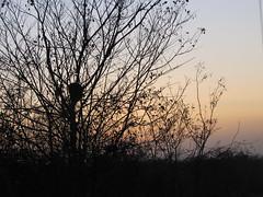 IMG_6901 (Nelson Luiz Wendel) Tags: pordosol couchersdesoleil durchsonnenuntergnge    v  puesta de sol sunset  gnbatm tarafndan dai tramonti av solnedganger semiarido caatinga cear trairi saogonaloamarante flexeiras mundau guajiru nordeste brasil brazil nelsonluizwendel wendel