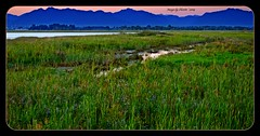 Dusk on the wet lands (Canoe Pass), Ladner BC CA (Images by Christie  Happy Clicks for 2016!) Tags: mountain canada vancouver river bc ranges wetlands fraser ladner