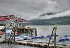 The Macaulay Salmon Hatchery (PhotosToArtByMike) Tags: alaska salmon ak juneaualaska salmoncreek salmonspawning cityofjuneau macaulayhatchery