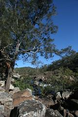 The Millstream (16) (sixdos) Tags: water river landscape waterfall woodlands rocks australia rapids waterfalls queensland waterway freshwater tropicalnorthqueensland farnorthqueensland geologicalfeature ravenshoe themillstreamriver