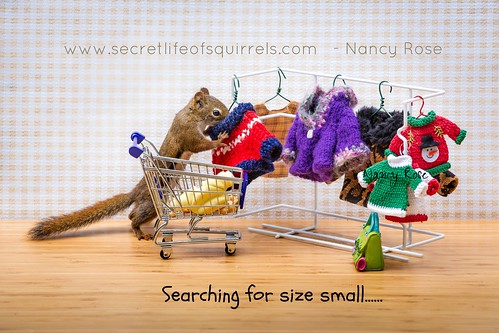 shopping real miniature squirrel sweaters clothes purse cart notphotoshopped 5251 wildoutdoors