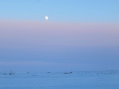 IMG_0771 (savillent) Tags: tuktoyaktuk northwest territories canada travel cold winter snow ice sky moon lunar full landscape arctic climate environment north photography point shoot canon sx700 savillent february 2017