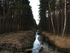 Forest_channels_02
