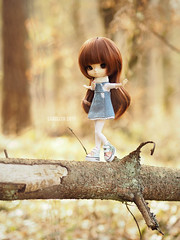 Balancing (Saga☆) Tags: yeolume full custom pullip groove aga obitsu21 obitsu 21 doll girl repaint faceup makeover mikiyochii mikiyo freckles brown dark auburn hair wig bangs eyes cute lovely pretty sweet young child baby kid toy asian saga sagelith rose rosie forest wood woods tree trees gold log balance balancing acrobat fun play spring