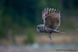 Hunting - IMG_0827