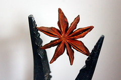 catch a falling star (overthemoon) Tags: macromondays thespacebetween staranise anisétoilé spice pliers pince closeup seeds thespaceinbetween star explore 42