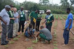 BASICS meeting participants visit cassava field (IITA Image Library) Tags: basicsproject planning me cassava manihotesculenta propagation iita
