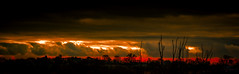 Red fired sky (Coisroux) Tags: ominous clouds dramatic dusk glowing shimmer luminescence firesky storms horizon golden redglow silhouette treelines darkness d5500 nikond stormy clarity sunset sunsets foreboding shining