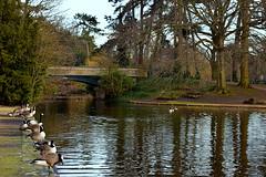 Lake ,Bridge and Wildfowel, West Park Wolverhampton (jhonnyclickplane) Tags: water wolverhampton lake wildfowl bridge d3300 nikon nature trees outdoor