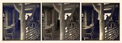 seen (zawaski) Tags: alberta dogs space ray naturallight noflash dog zawaski©2017 beauty canada calgary canmore juerg ambientlight rockymountains portrat love wood rays canonefs18200mmf3556is