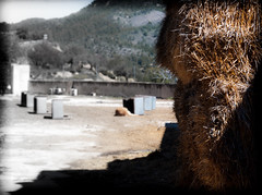 DESCOLORIDO (ROGE gonzalez ALIAGA) Tags: paja ganado ganaderia