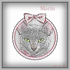 """Marin fills her Mama's & Dad's days with happiness."" (martian cat) Tags: ribbet russianblue kitty kittycat cat pet ©martiancatinjapan allrightsreserved© macro marin ©allrightsreserved martiancatinjapan© motivational motivationalposter inspirational ☺allrightsreserved allrightsreserved caption captioncollection ☺martiancatinjapan creativity onwhite girlkitten kitten martiancat martiancat© ©martiancat martiancatinjapan"