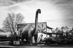 Rainbow Rock Shop. Route 66. Holbrook. AZ (PickledMonkeyStudio) Tags: holbrook route66 arizona dinosaurs rockshop rainbowrockshop holbrookarizona az roadside