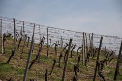 2017-04-01 Weinprobe 0442 (waltemi) Tags: 2017weinprobe thüngersheim weinstock zellingen bayern deutschland de