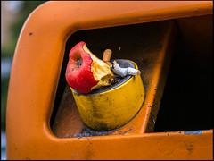 20150711-079 (sulamith.sallmann) Tags: abfall abfallbehälter apfel apfelgriebsch apple behälter behältnis envoirement ernährung essen feeding food frucht fruit früchte garbage kippen müll mülleimer nahrung nahrungsmittel nutriment obst rubbish umwelt vitamine waste zigaretten zigarettenstummel berlin deutschland deu sulamithsallmann