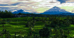 Jatiluwih Rice Terraces (Kelly Renée) Tags: bali indonesia jatiluwih seasia clouds landscape morning mountains riceterrace sunrise travel volcanos