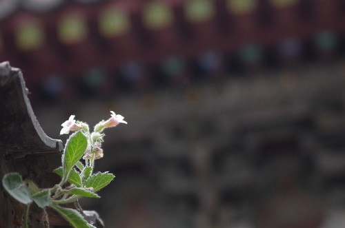 Taishan - Dai Temple / 泰山 - 岱庙