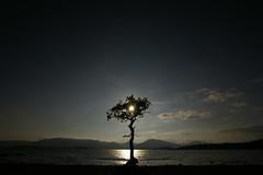 Millarochy Bay 2 (Sue Langford) Tags: scotland oak pentax lochlomond millarochybay pentaxk100dsuper