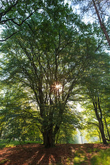 Aardhuisweg Ochtend-37.jpg (Jack J.S. Schaper) Tags: wood trees light colour tree green nature netherlands colors landscape dawn spring woods groen colours forrest nederland natuur boom blad bos landschap noordholland bladeren ochtendgloren canon247028lusm canon5dmkii