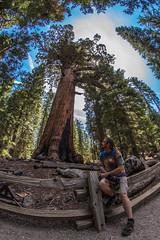 IMG_8725 (Alan Studt) Tags: california forest canon nationalpark yosemite redwood 8mm sequoia yosemitevalley giantredwood giantsequoia mariposagrove grizzlygiant f35 t4i rokinon shotinrawformat alanstudt adobelightroom5