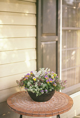 (Lesley Rivera) Tags: light flower film 35mm canon table photography rebel fuji front baltimore pot porch