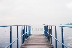 Wanderlust (lontrog) Tags: seagulls lake birds misty switzerland dock geneva foggy leman montreux vaud
