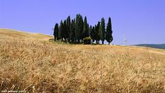 Il Bosco dei Cipressi in Val D'Orcia (fotografia per passione) Tags: canon tuscany montalcino toscana valdorcia toscane cretesenesi cipressi marksoetebier canonef40mmf28stm