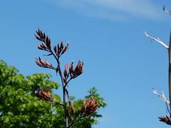 Pinner Parks and Harrow (Savan G Photography) Tags: london nature wildlife harrow naturephotography wealdstone pinner wildlifephotography savangphotography savangandecha