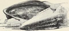 Anglų lietuvių žodynas. Žodis pliosaurus reiškia <li>pliosaurus</li> lietuviškai.