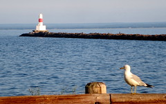 Gull and breakwater light (yooperann) Tags: park light fence island harbor michigan gull upper peninsula isle marquette presque breakwall breakwater ringbilled