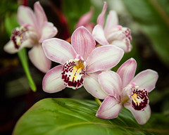 (seua_yai) Tags: sanfrancisco california goldengatepark park plants usa orchid flower america thecity bayarea northamerica