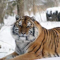 2014-01-29 Snow Aria (154)