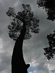 """""""debout comme l'antenne pour relier terre au ciel..."""" (keny arkana) (laetitiablabla) Tags: sky cloud france tree nature brittany bretagne breizh ciel nuage foret arbre morbihan vannes conleau rincin"""