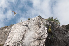 (Neohavi) Tags: sky bird water waterfall agua coruña cielo pajaro gaviota cascada