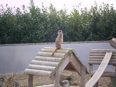 2008-10-18 Tropical Wings _5 (Velda Tiger Lily Varney) Tags: camera pentax compact cameraequipment pentaxoptiol30 brandmain