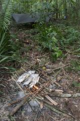 DSC_5009 (Andrew Snyder Photography) Tags: ranch nature river wildlife conservation guyana research savannah biodiversity rupununi sigma15mm dadanawa kanukumountains guianashield andrewmsnyder