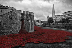 Blood Swept Lands and Seas of Red (C-Imagery) Tags: red london castle soldier blackwhite nikon poppies remembranceday remembrance moat toweroflondon armistice solemn niksoftware silverfx bloodsweptlandsandseasofred