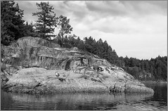 mansons rocks (tesseract33) Tags: world ocean travel light sea blackandwhite art water monochrome outside outdoors nikon seagull mansonslanding nikond300 tesseract33 peterlangphotography squamishphotographer