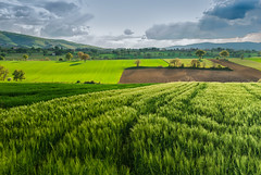 Dark clouds over wheat field (masquerade75) Tags: trees sky panorama cloud green nature beautiful beauty field grass clouds rural landscape outdoors countryside spring scenery europe natural outdo