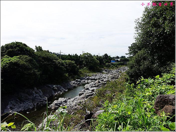 濟州島牛沼河口 (9).JPG