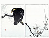 Cherry and common hill myna (Japanese Flower and Bird Art) Tags: flower bird art japan cherry japanese book hill picture common woodblock nihonga prunus watanabe religiosa myna rosaceae seitei sturnidae gracula readercollection