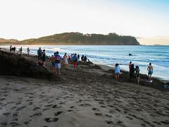 142 - Foule à Hot Water Beach