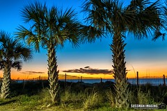 Sunrise at the Beach (The Suss-Man (Mike)) Tags: 2ndavenuepier atlanticocean beach horrycounty myrtlebeach nature ocean pier secondavenuepier sky sonyilca77m2 southcarolina sunrise sussmanimaging thesussman water tree palmtree longexposure slowshutterspeed