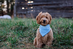Kasey and Chase's Wrigley has the cutest wink!