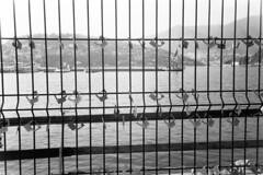 Rivogliamo il lungolago! (sirio174 (anche su Lomography)) Tags: zorki1 zorki jupiter12 lago lungolago protesta lucchetti paratie spreco scempio manifestazionepubblica laprovincia como italia italy lake lagodicomo comolake lario