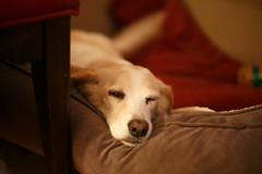 20170325_81495 (AWelsh) Tags: dog amy canine mutt andrewwelsh canon5dmkiii 504